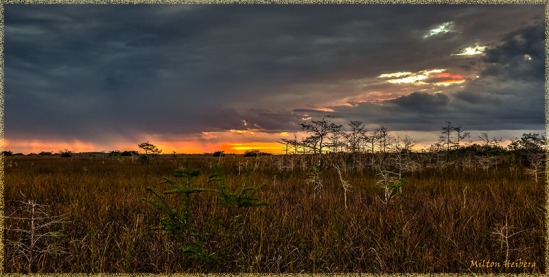 Mahogany Train Sunset, Everglades NP