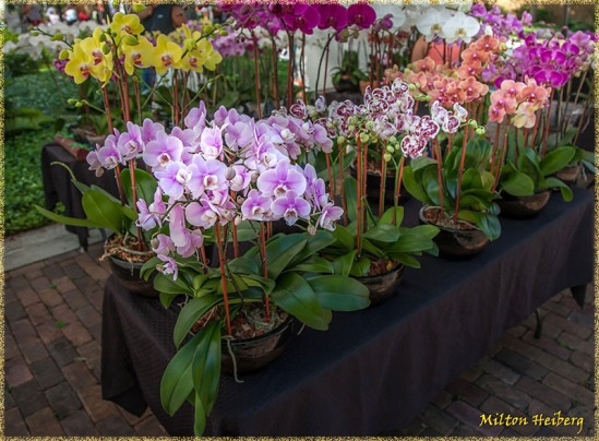 6. More orchids from Trish