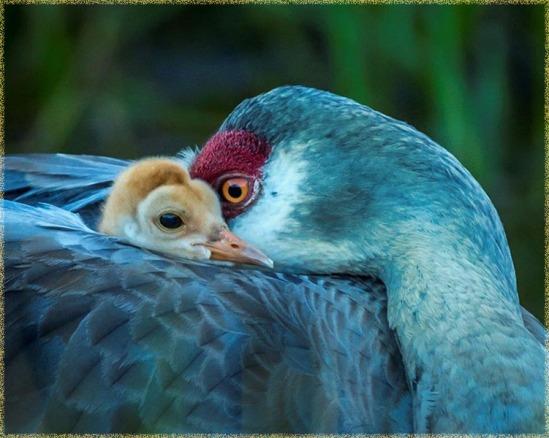 Audubon Chertok Contest - 2014