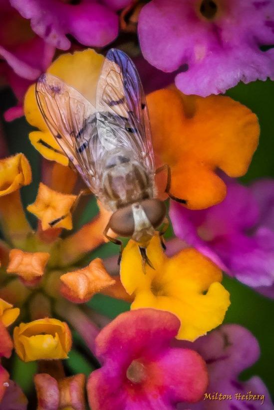 8. Bug