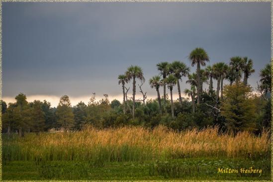 2. Dawn Landscape